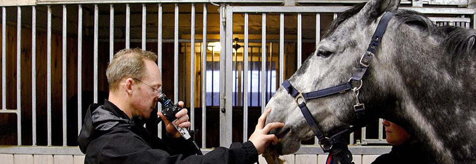 Behandlingar för häst
