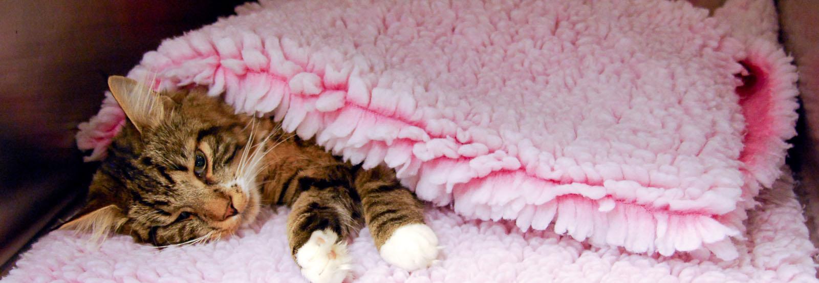 Tips och råd för smådjur